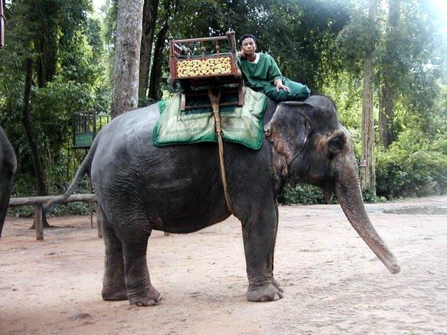 éléphant en selle avant la promenade